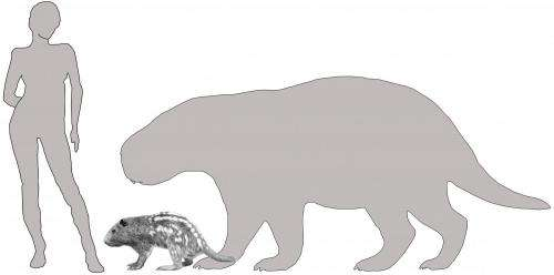 Giant rodent used incisors like tusks