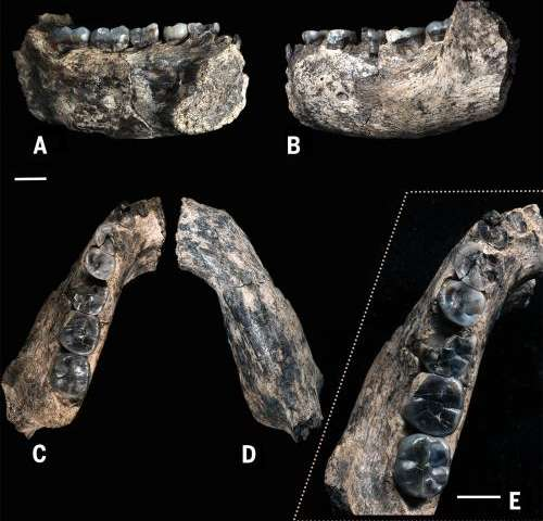 Earliest known fossil of the genus Homo dates to 2.8 to 2.75 million years ago