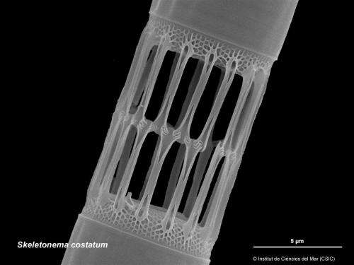 Ascension of marine diatoms linked to vast increase in continental weathering
