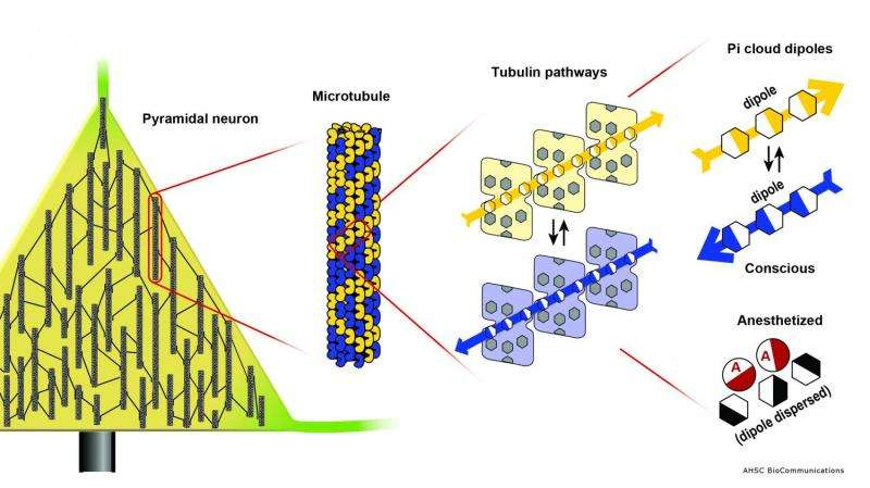 Quantum Criticality in life's proteins (Update)
