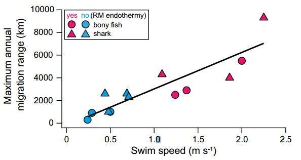 Warm bodied fishes found able to swim farther and faster than cold bodied fish