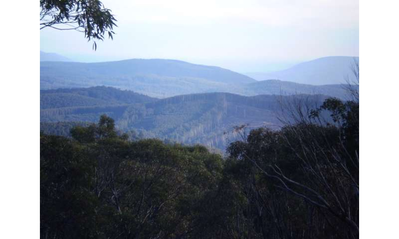 A great big new forest park won't save Leadbeater's possum
