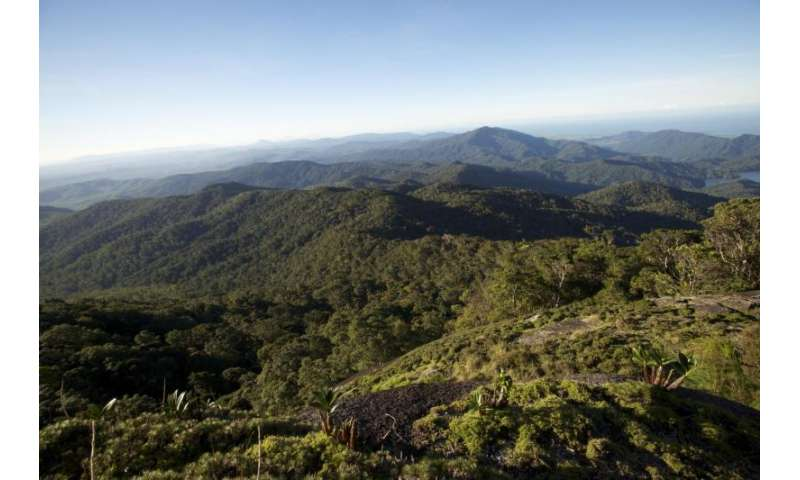 High-altitude climate change to kill cloud forest plants