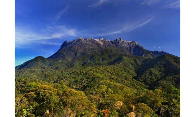 Evolution peaks on tropical mountain