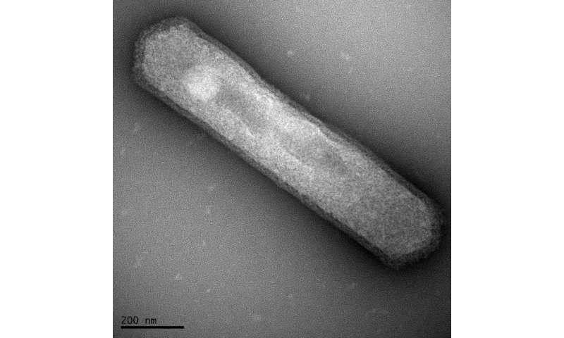 Lab experiments question popular measure of ancient ocean temperatures