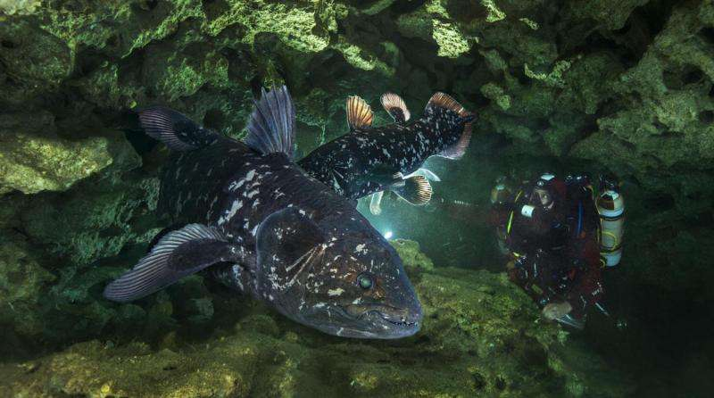 Queer fish: 'Living fossil' sports a lung