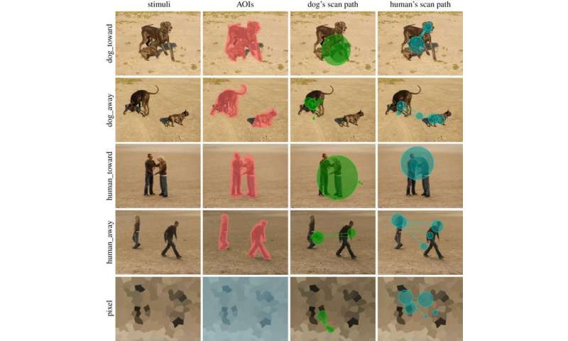 Study show similarities and differences in gazing between humans and dogs