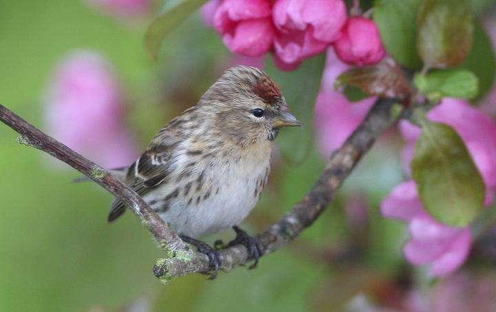 European birdwatchers unravel how birds respond to climate change