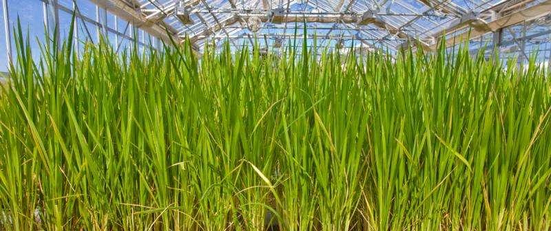 Marginal soil can make for good biofuel crops