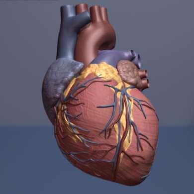 Glucosamine may help lower risk of cardiovascular disease