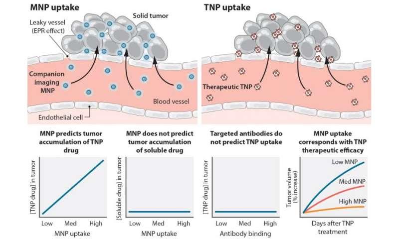 New method developed to predict response to nanotherapeutics