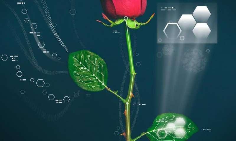 Electronic plants developed