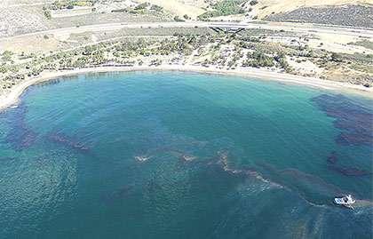 5 pelicans, 1 sea lion rescued in Santa Barbara oil spill
