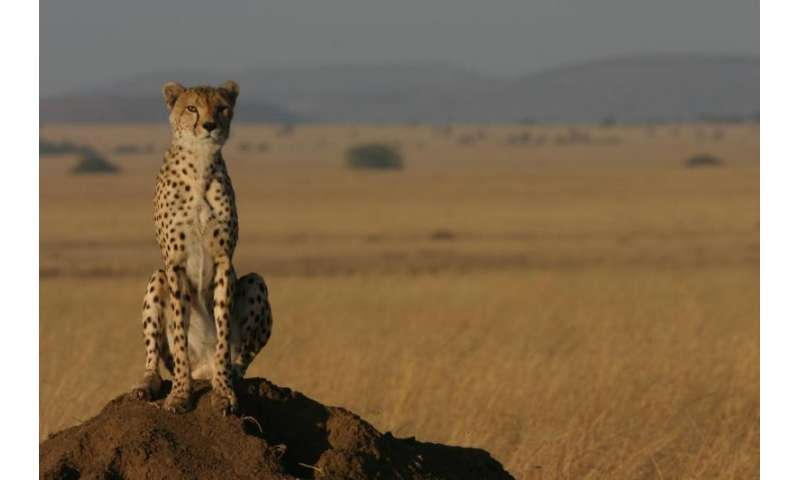 Conservationists 'on the fence' about barriers to protect wildlife in drylands