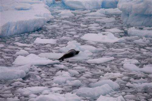 Critters found in Antarctic ice shows how tenacious life is