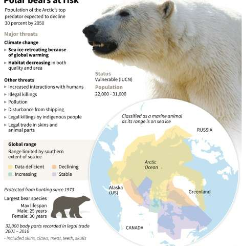 Factfile on the polar bear species, set to lose 30% of its population by 2050 due to threats including global warming and loss o