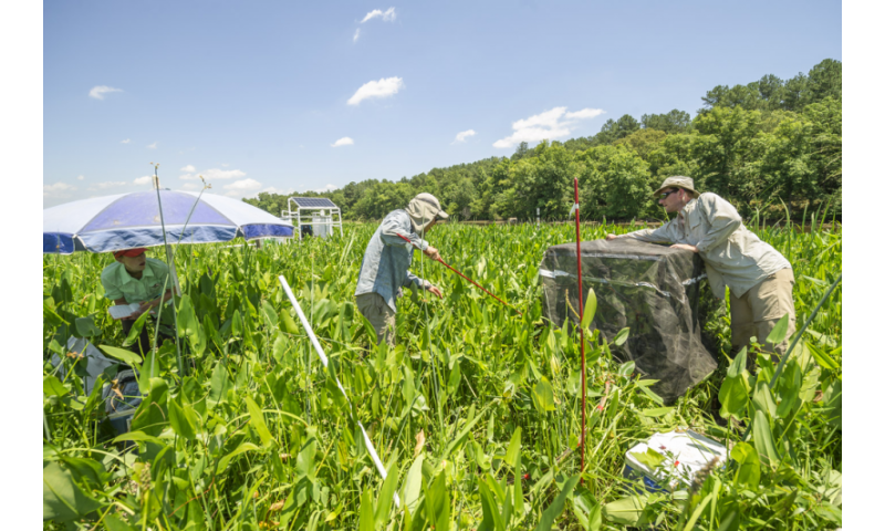 Researchers study the impact of saltwater intrusion on tidal wetlands