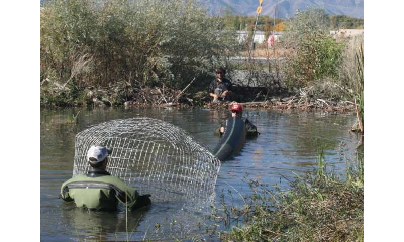 Utah State University Researchers Install Pond Leveler at Beaver Dam on Walmart Store Property