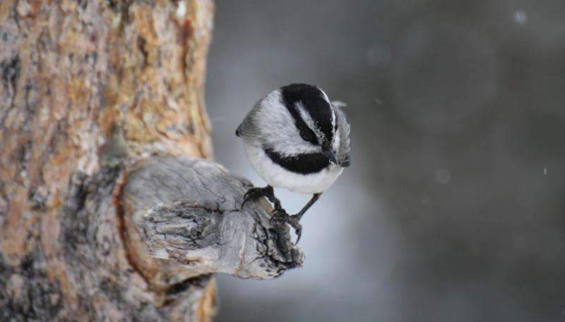 Researchers uncover multiple adaptations to temperature in birds and mammals