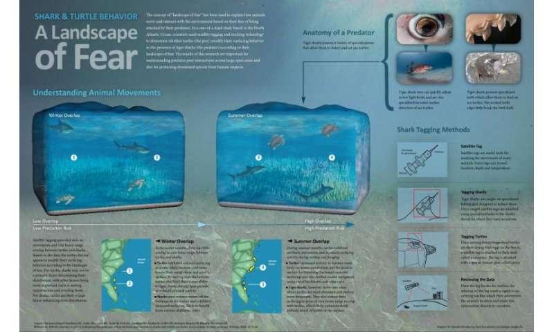 Scientists study predator-prey behavior between sharks and turtles