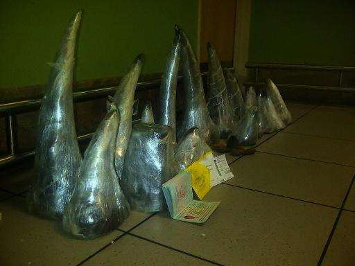 A cache of 41 kilos of smuggled rhino horns are seen at the O.R. Tambo International Airport in Johannesburg after they were con