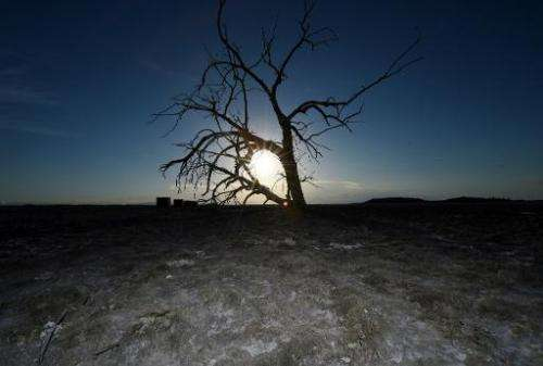 A dead tree is seen on a dried part of the shoreline near Red Hill Marina at the Salton Sea, California on March 19, 2015