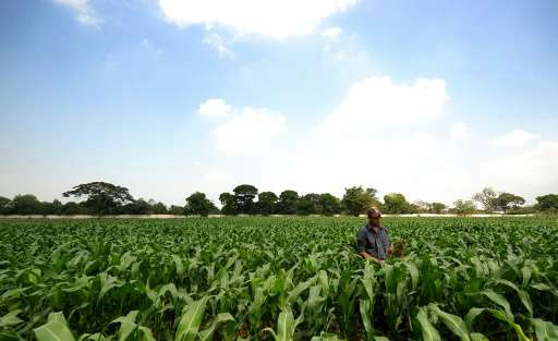A drought cost nearly $100 million in lost corn and bean harvests in El Salvador in June and July, the government said Monday