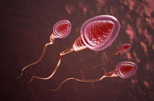 Advance in the development of the first reversible male contraceptive