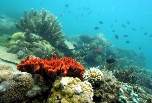 A Florida aquarium has reached an agreement with one in Cuba to cooperate on coral conservation efforts