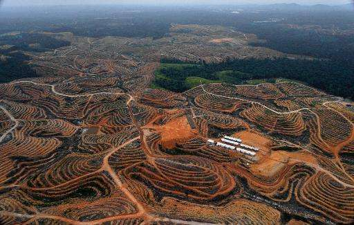 A forest is cleared on a piece of land to be developed into a palm oil plantation, on Indonesia's Borneo island, as seen in Febr