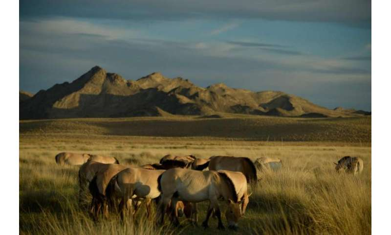 After 100 years in captivity, a look at the world's last truly wild horses