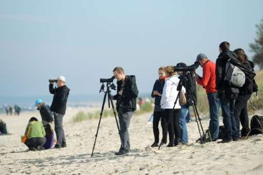 "Amateur bird watchers pictured on a beach near Krynica Morska, northern Poland, on October 3, 2015 during an annual ""Bird P"