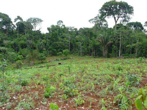 Amazon deforestation 'threshold' causes species loss to accelerate