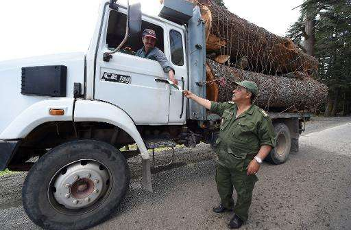 A Moroccan forest guard checks a logger's documents in the Cedrus Atlantica forest, near the central town of Azrou