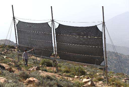 A Moroccan inspects fog fences in a hamlet on the outskirts of the southern coastal city of Sidi Ifni, on June 7, 2015