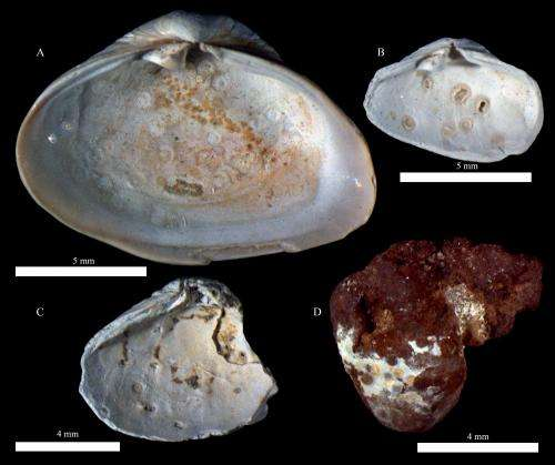 Ancient fossils reveal rise in parasitic infections due to climate change