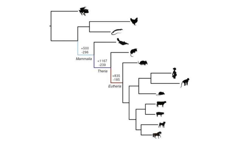 Ancient 'genomic parasites' spurred evolution of pregnancy in mammals