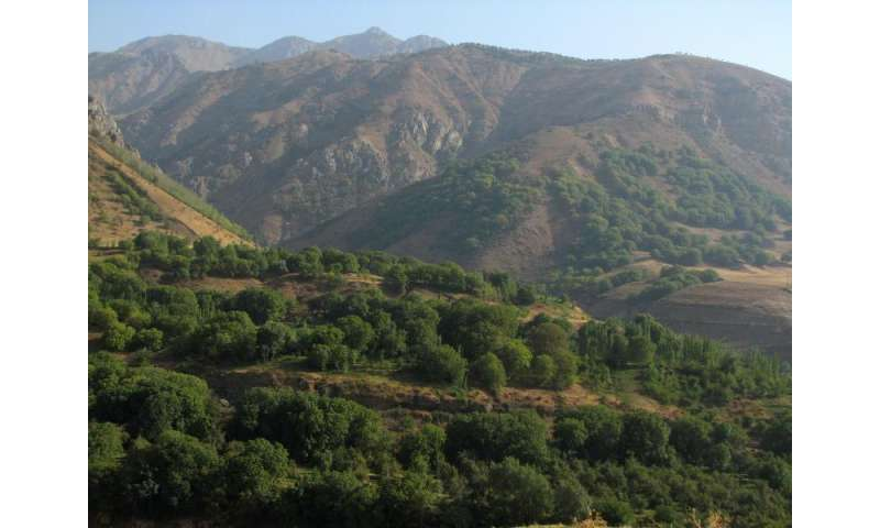 Ancient walnut forests linked to languages, trade routes