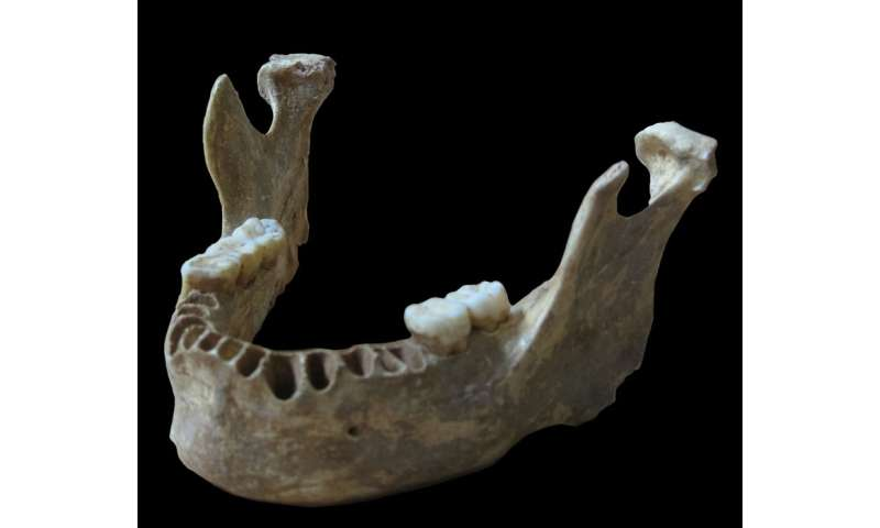 An early European had a close Neandertal ancestor
