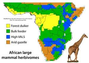 animals in africa 1000 years ago