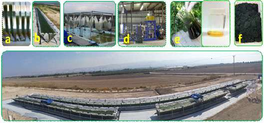 A novel technology to produce microalgae biomass as feedstock for biofuel, food, feed and more