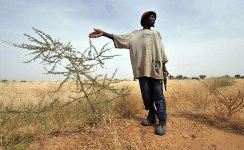 A peasant from the village of Selbo in northern Burkina Faso gestures near grass he planted to help stop the advance of the Saha