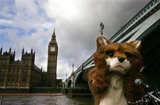 A person dressed as a Fox sails past The Houses of Parliament as part of an anti-hunting protest in London