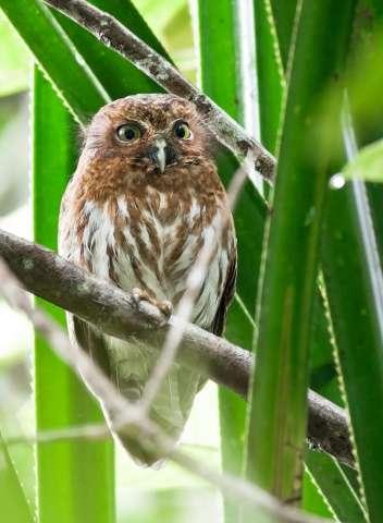 Devastation in Philippine bird paradise