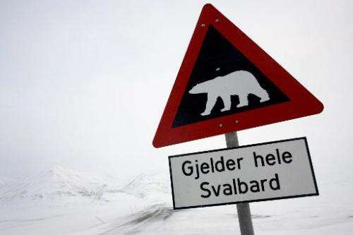 A polar bear has injured the face and arm of a Czech tourist in Norway