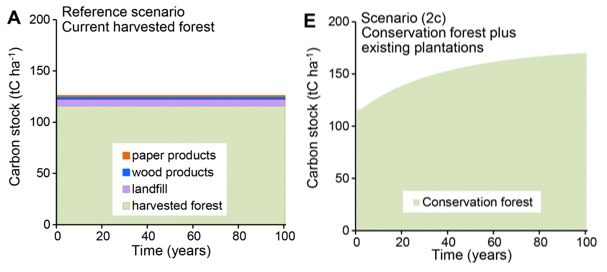 Are forest climate mitigation strategies one-size-fits-all?