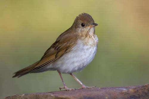 Are human behaviors affecting bird communities in residential areas?