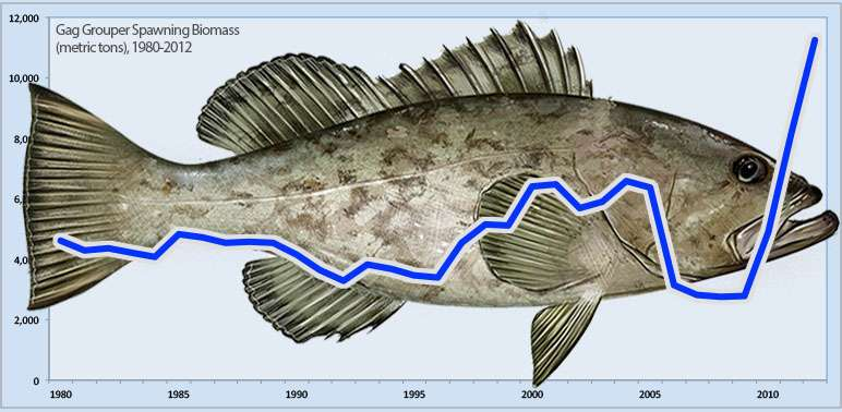Are our fisheries laws working? Just ask about gag grouper