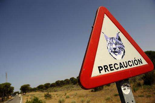 A road sign warning to watch out for lynxes at the Donana National Park in southwestern Spain