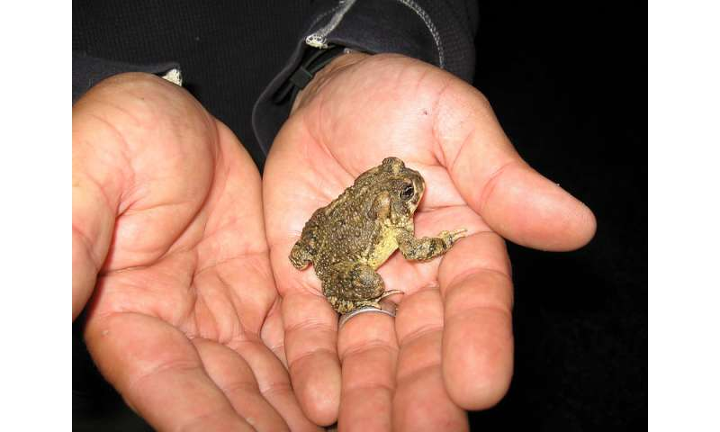 Arroyo toad remains classified as endangered under federal Endangered Species Act